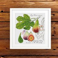 {en:Plants cross stitch pattern Fig Fruits;}