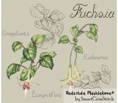 {en:Floral cross stitch pattern Fuchsia;}