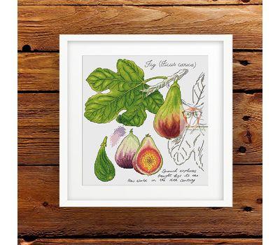 {en:Plants cross stitch pattern Fig Fruits;}